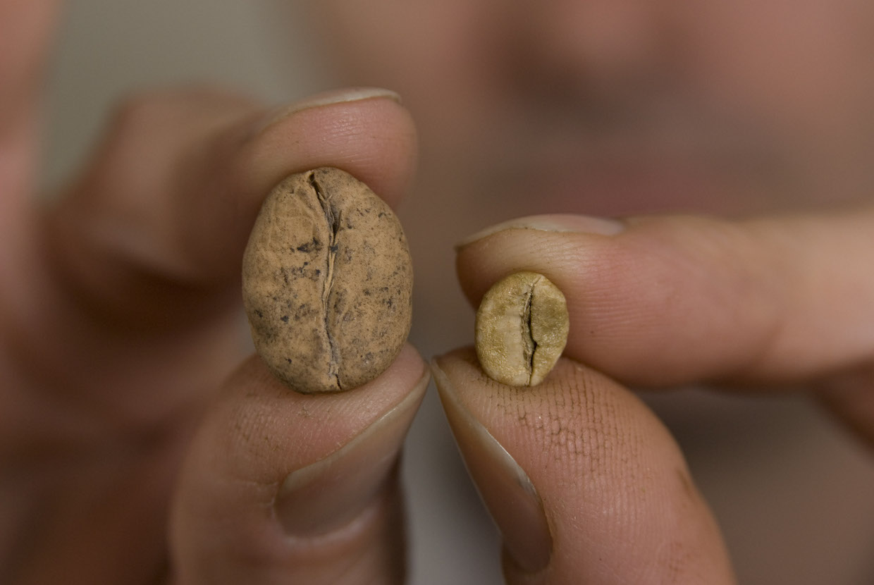 Coffee Beans, large and small
