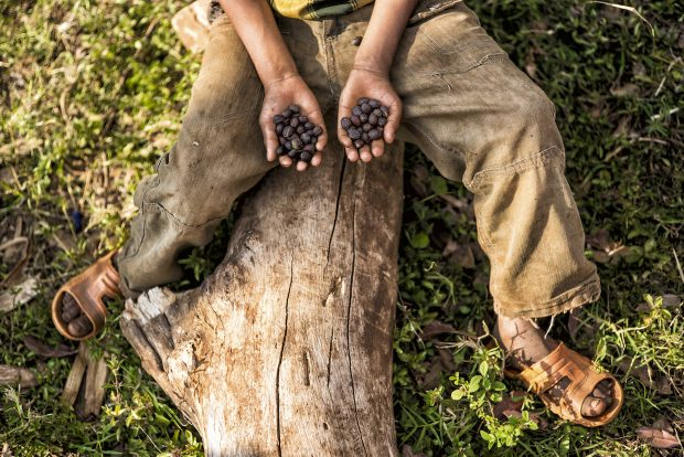 Naturally dried forest coffee, south-west Ethiopia. Image Emily Garthwaite_Union Hand-Roasted Coffee