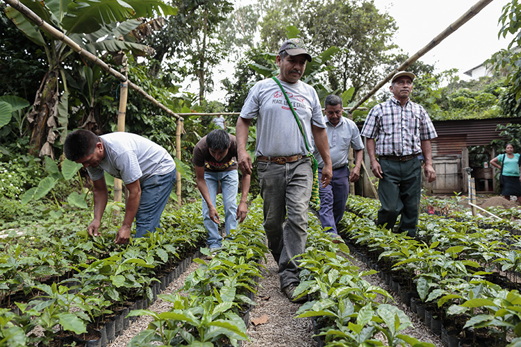 CRS GUATEMALA – GREEN COFFEE PROJECT