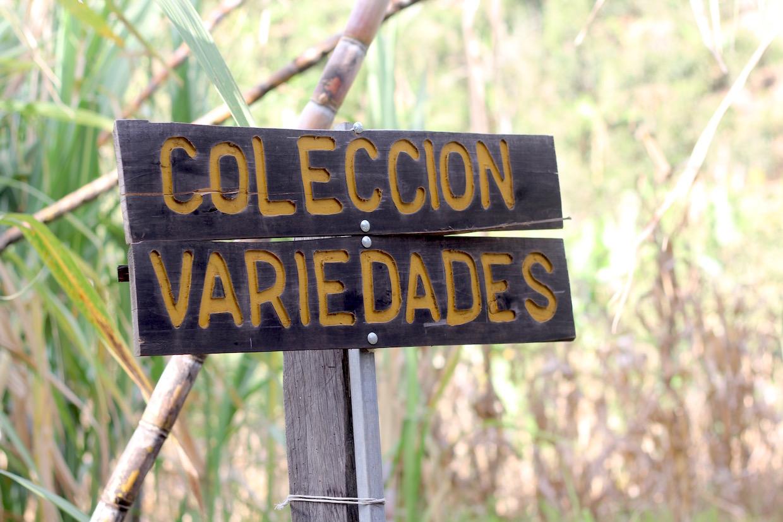 coleccion variedades