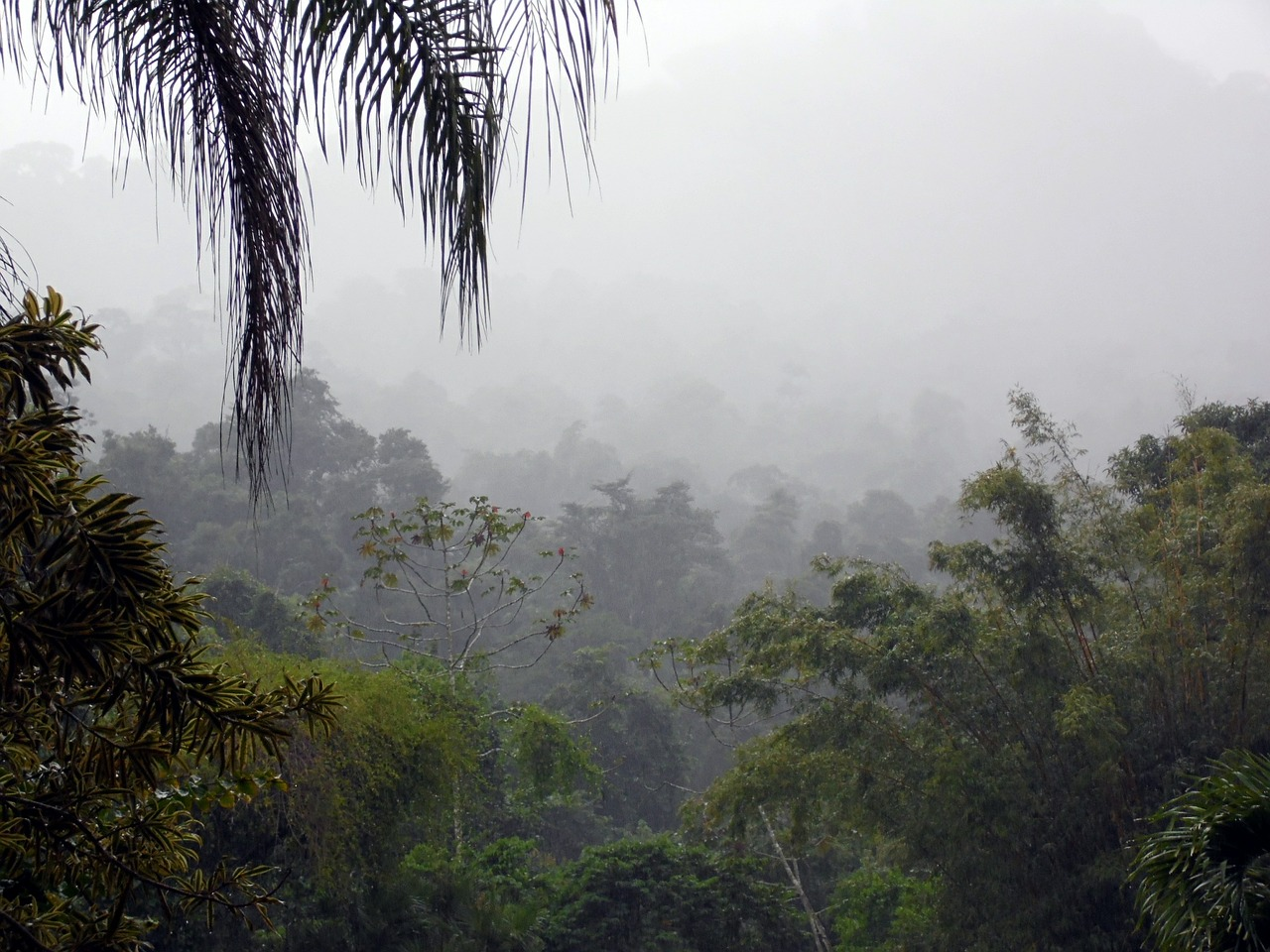 misty rainforest jungle
