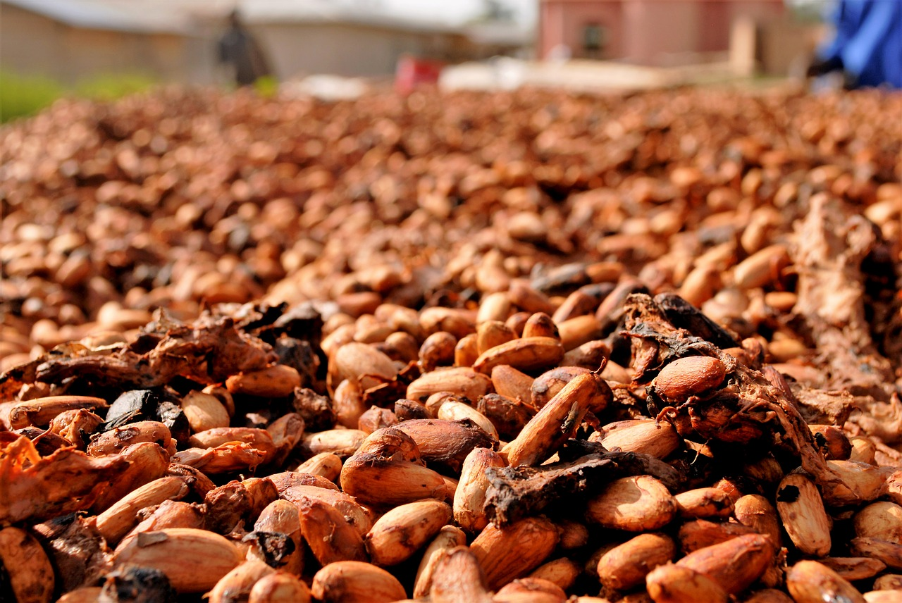 Cocoa Price Floor Scheme Falters in Meeting with