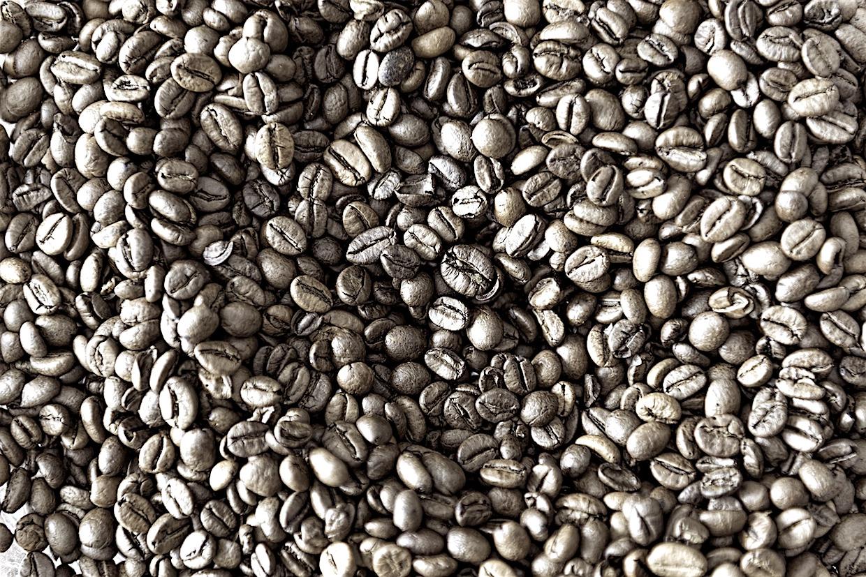 coffee robusta or arabica