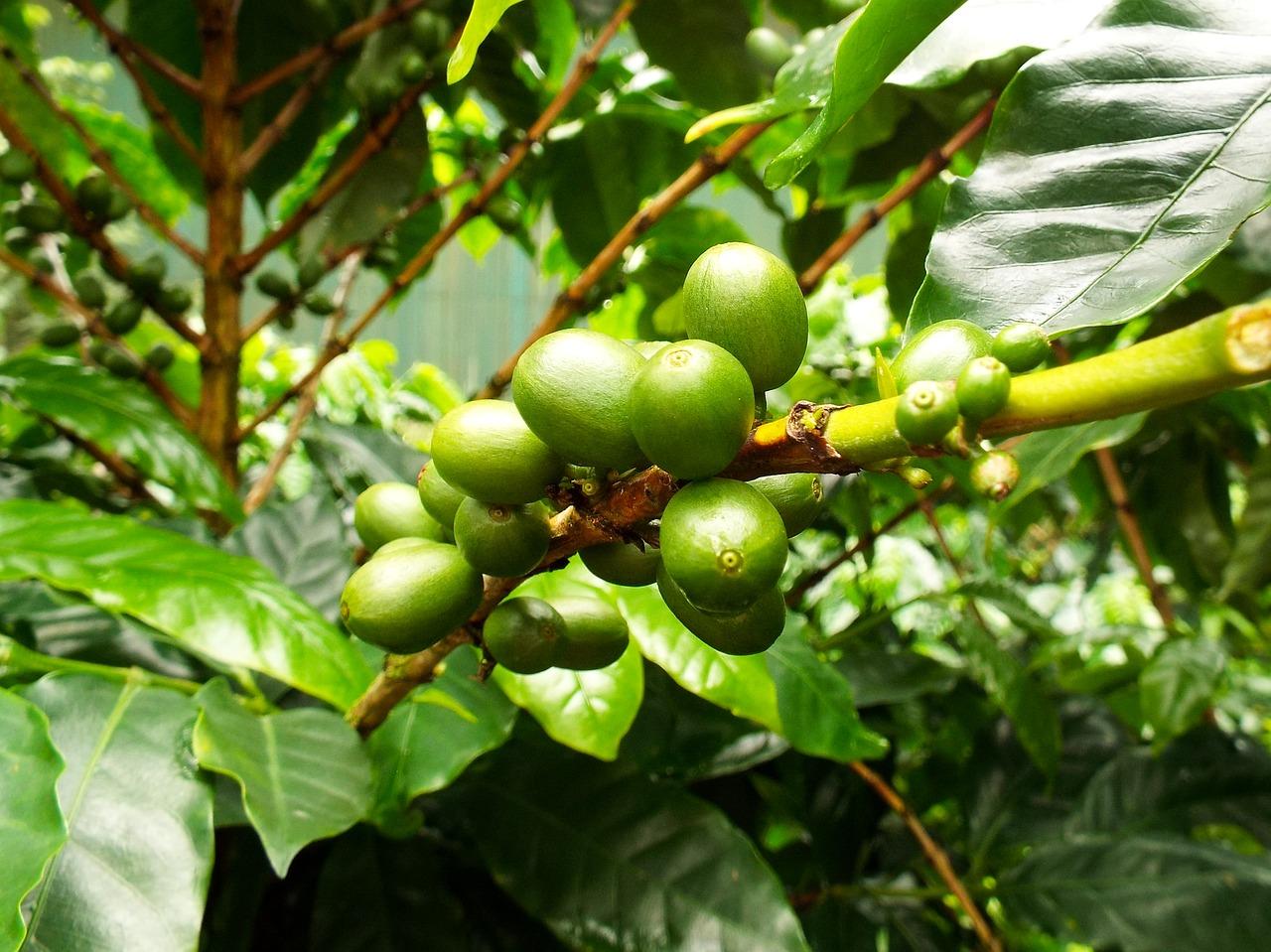 coffee-2508125_1280 (1)