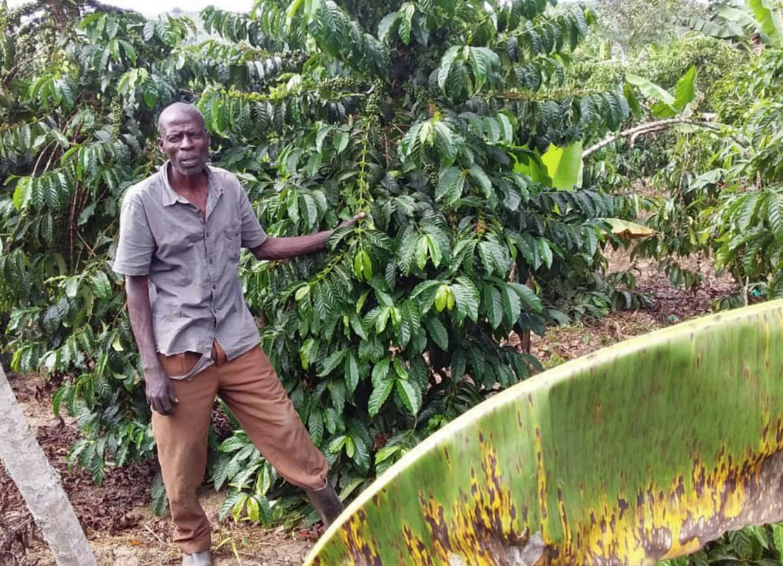Uganda_coffee