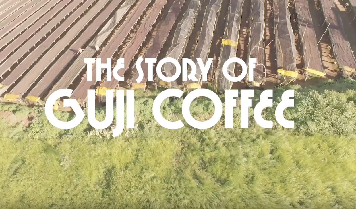 The Extraction Goes Gaga for Guji