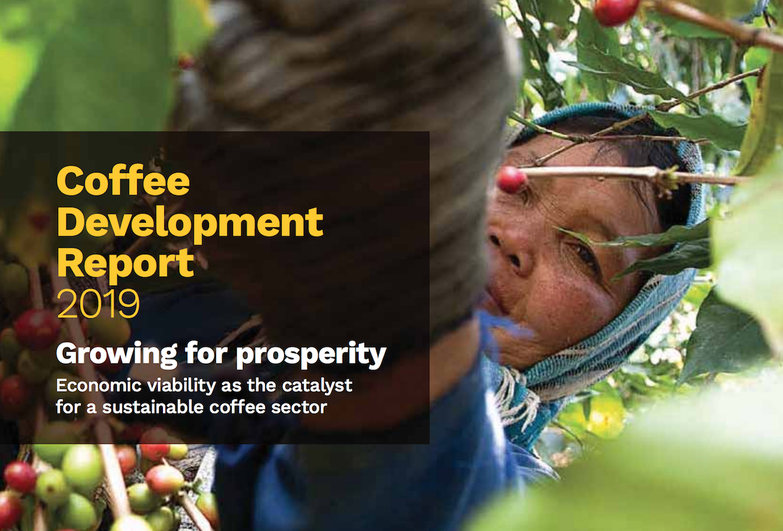 ICO coffee development report