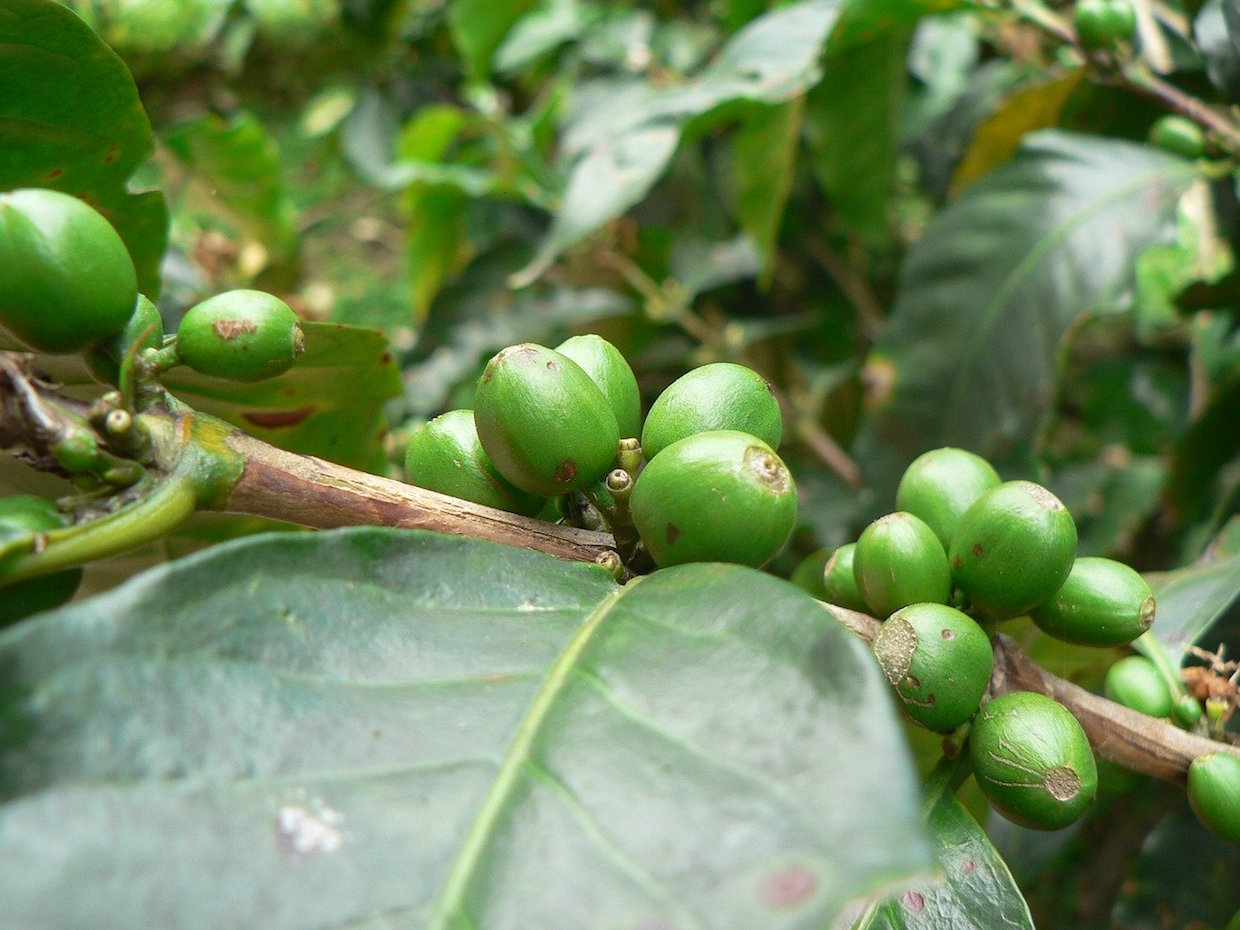 coffee sustainability report