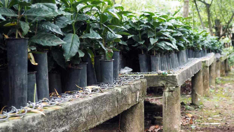 huixoc seedlings