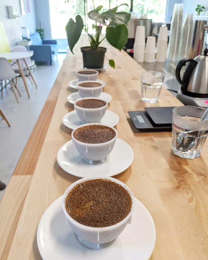 coffee cupping at Elevation Northdale