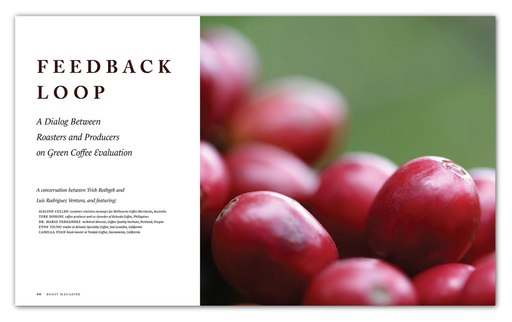 Feedback loop green coffee evaluation