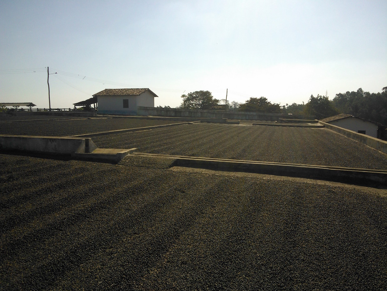 Brazil coffee drying patio