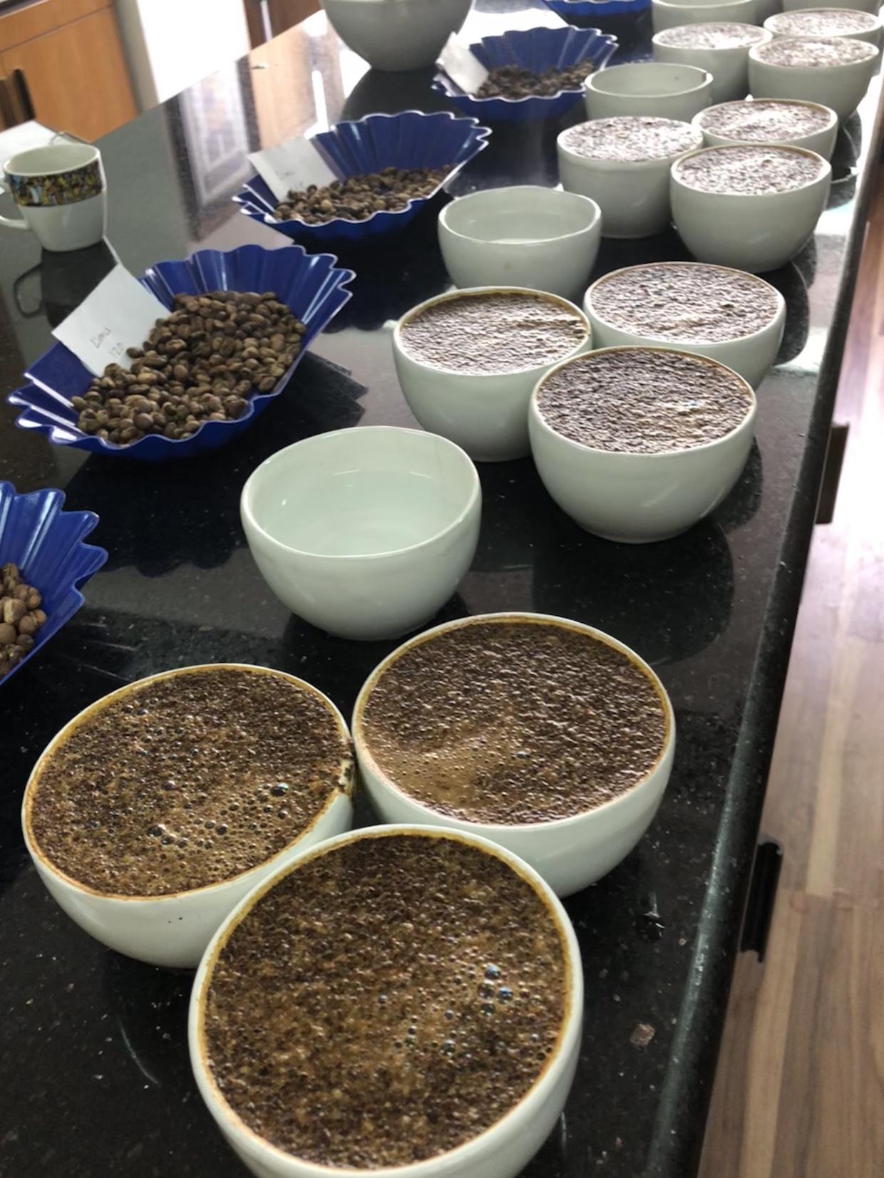 Coffee Cupping- Lisa Gerben