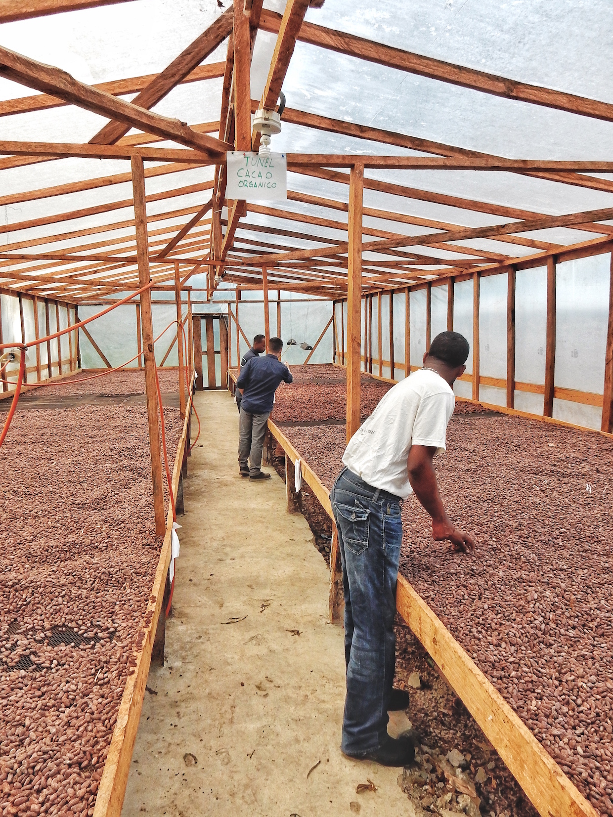 cacao drying beds