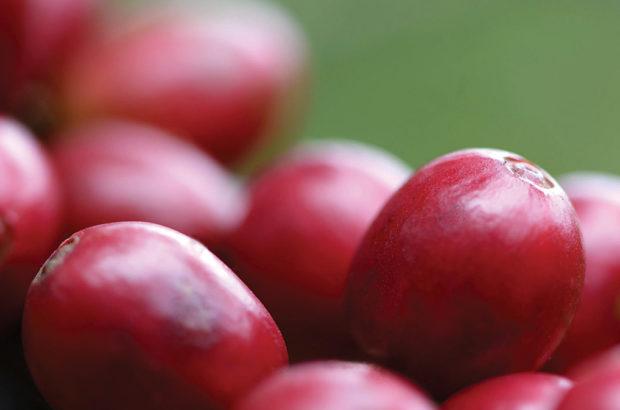 cherries – feedback loop
