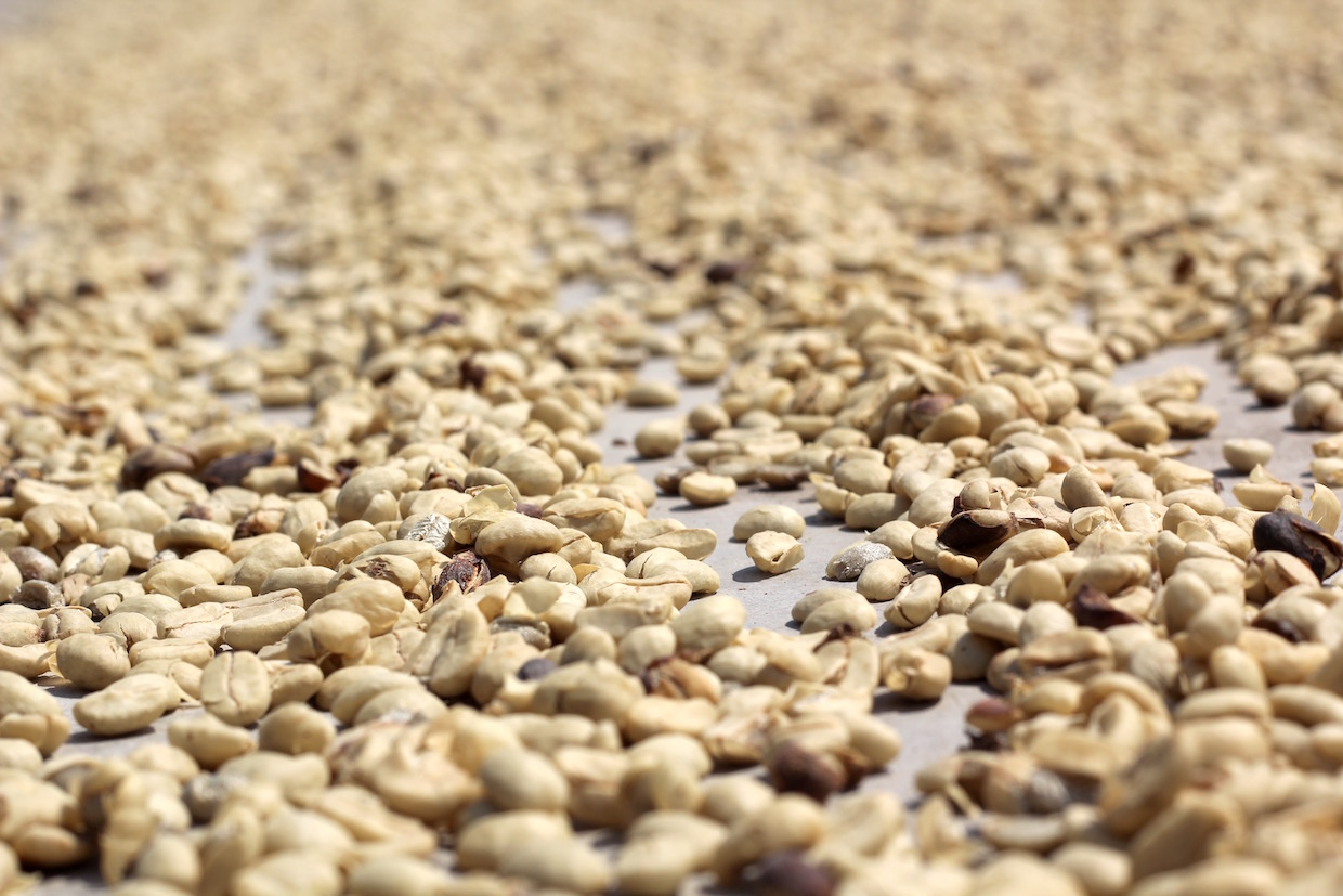parchment coffee