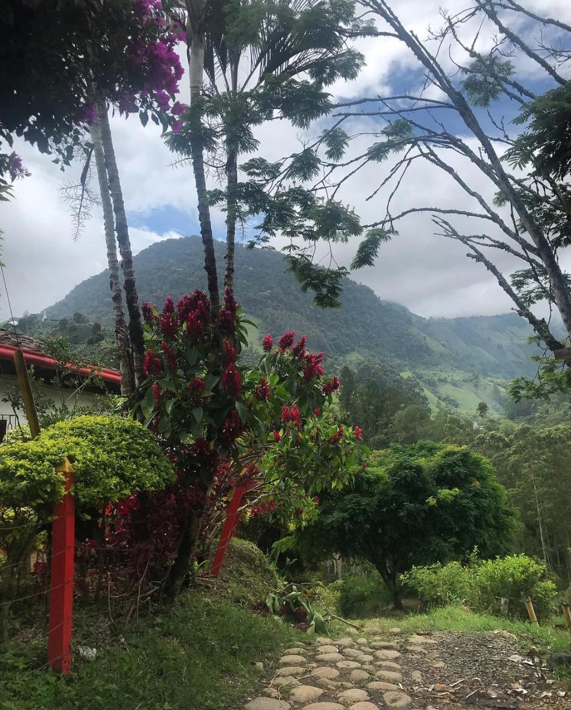 Colombian coffeelands
