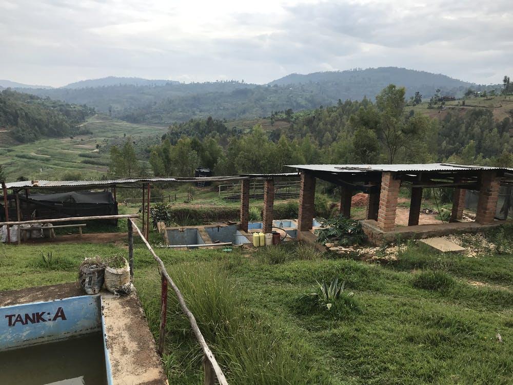 Rwanda Coffee vista