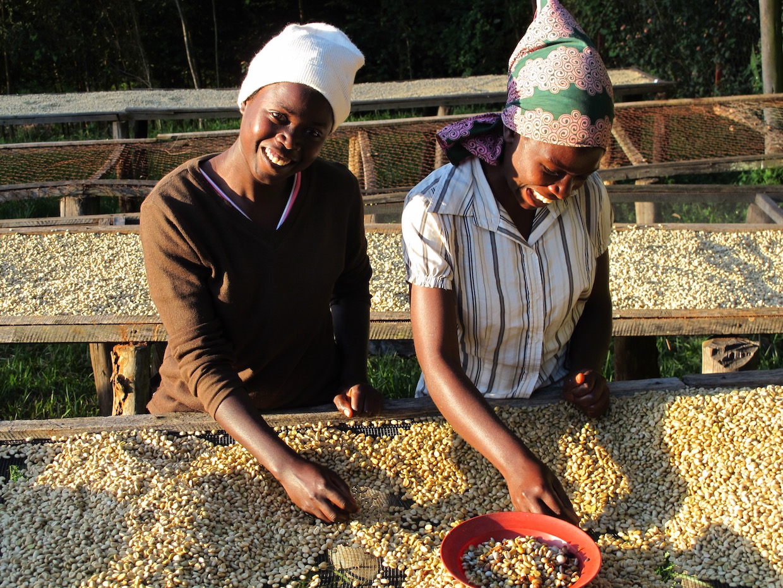 Coffee farm_credits_Rainforest Alliance