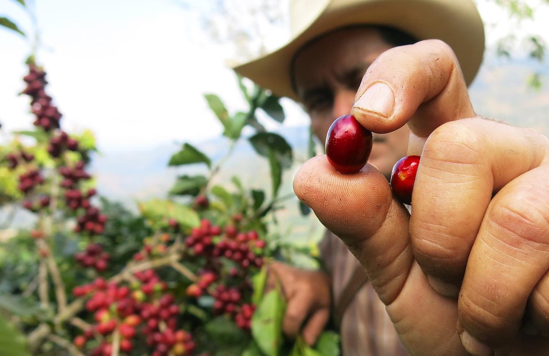 Coffee farmer_credits_Rainforest Alliance