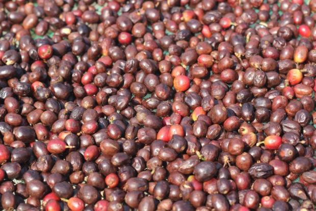 Microlot coffee