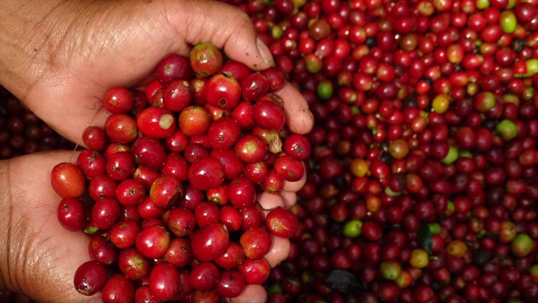 PMA coffee 4