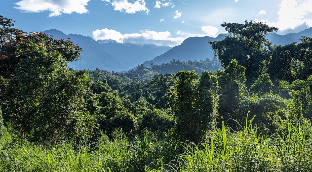 DRC – Farm Africa – Virunga National Park.