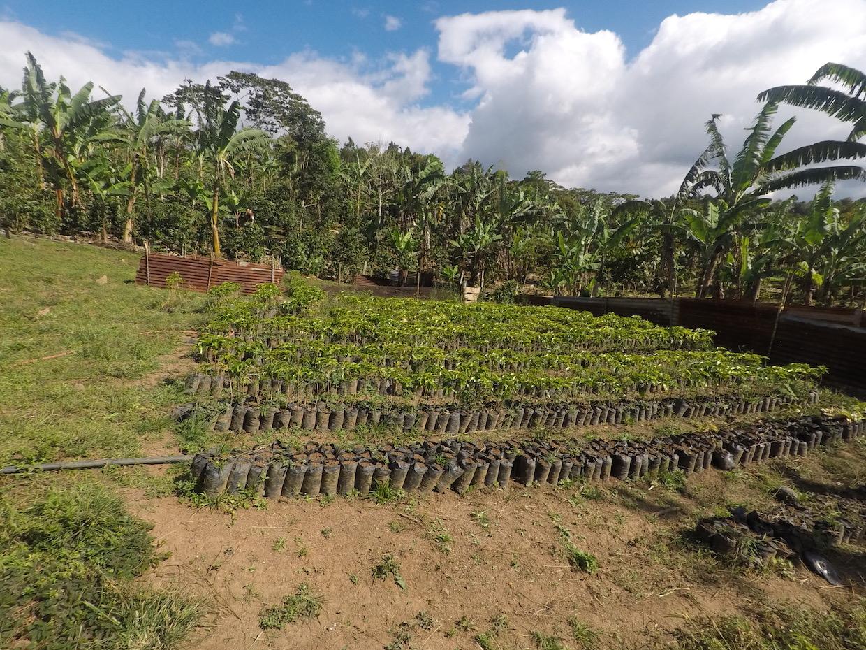 La Odisea farm