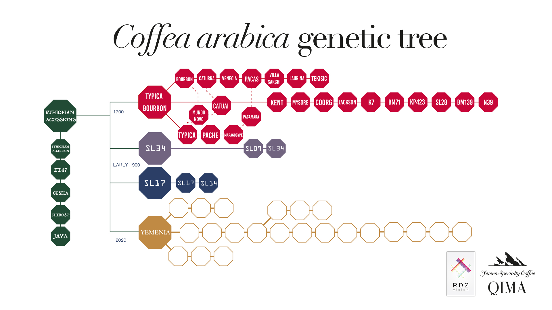 coffea arabica genetic tree copy