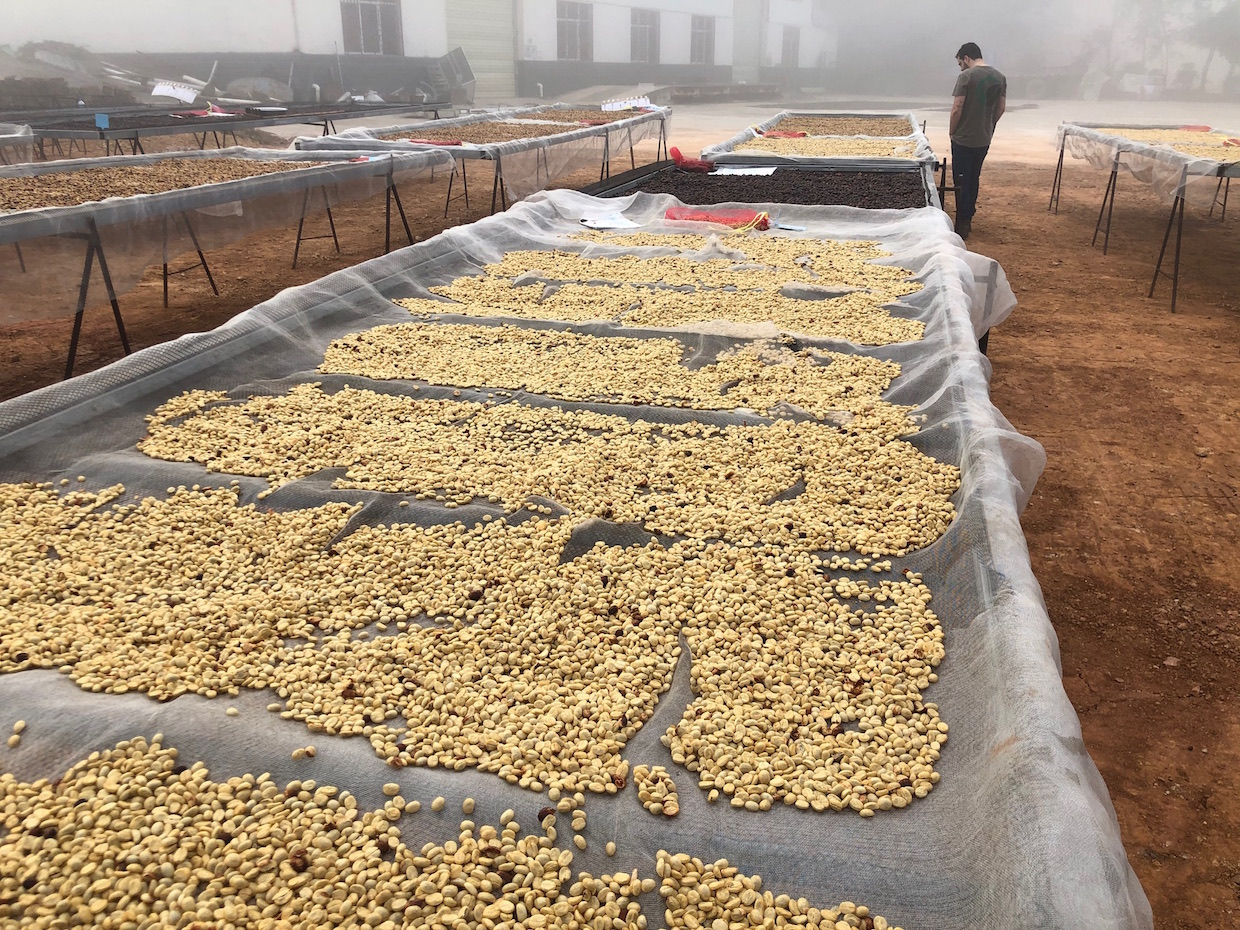 Yunnan coffee drying