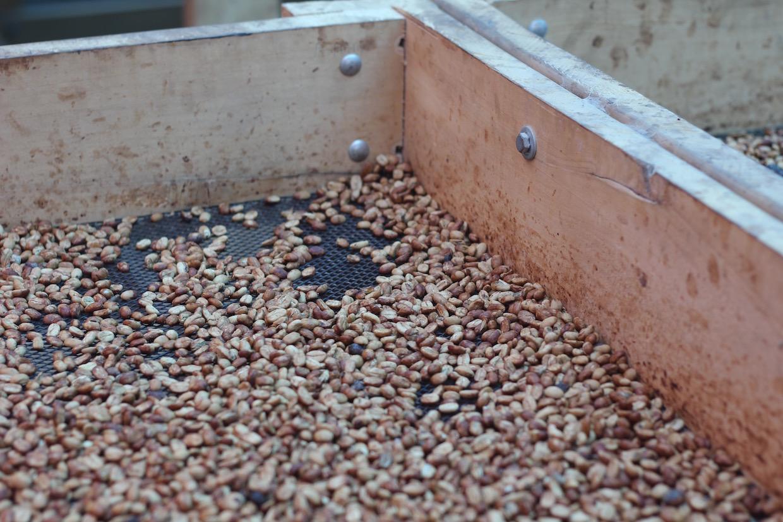 咖啡烘乾蜂蜜工藝