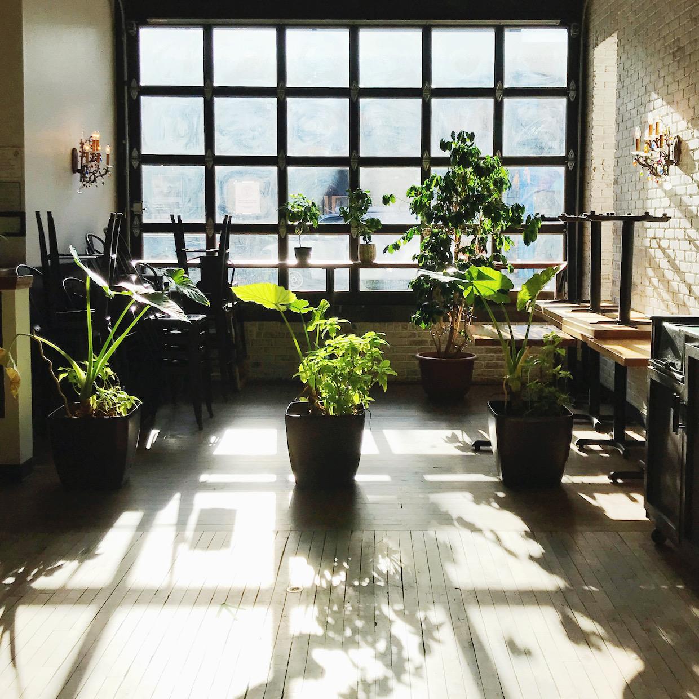 coffee shop plants