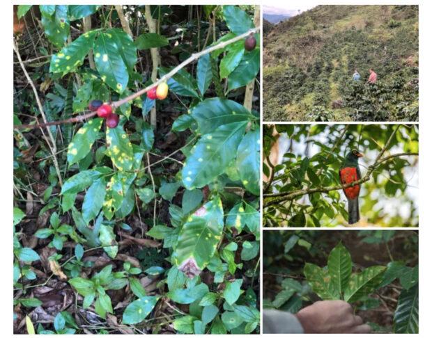 coffee sustainability