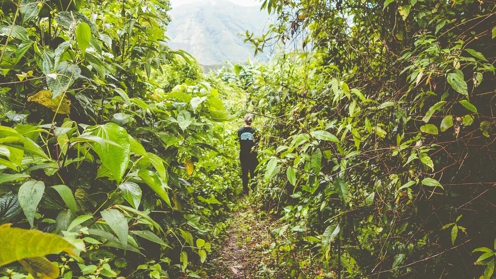 Farm PERU – AGUA DE NIEVES