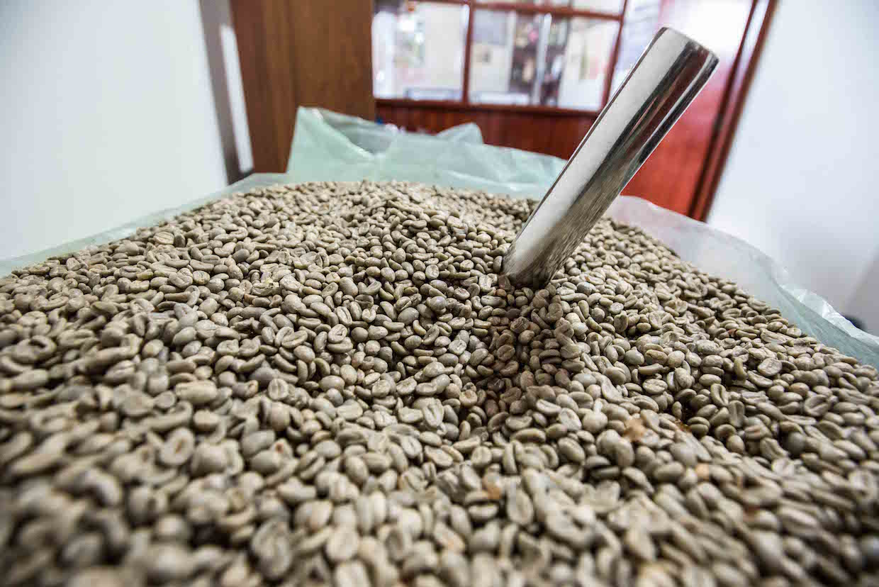 Sustainable Harvest Green Coffee