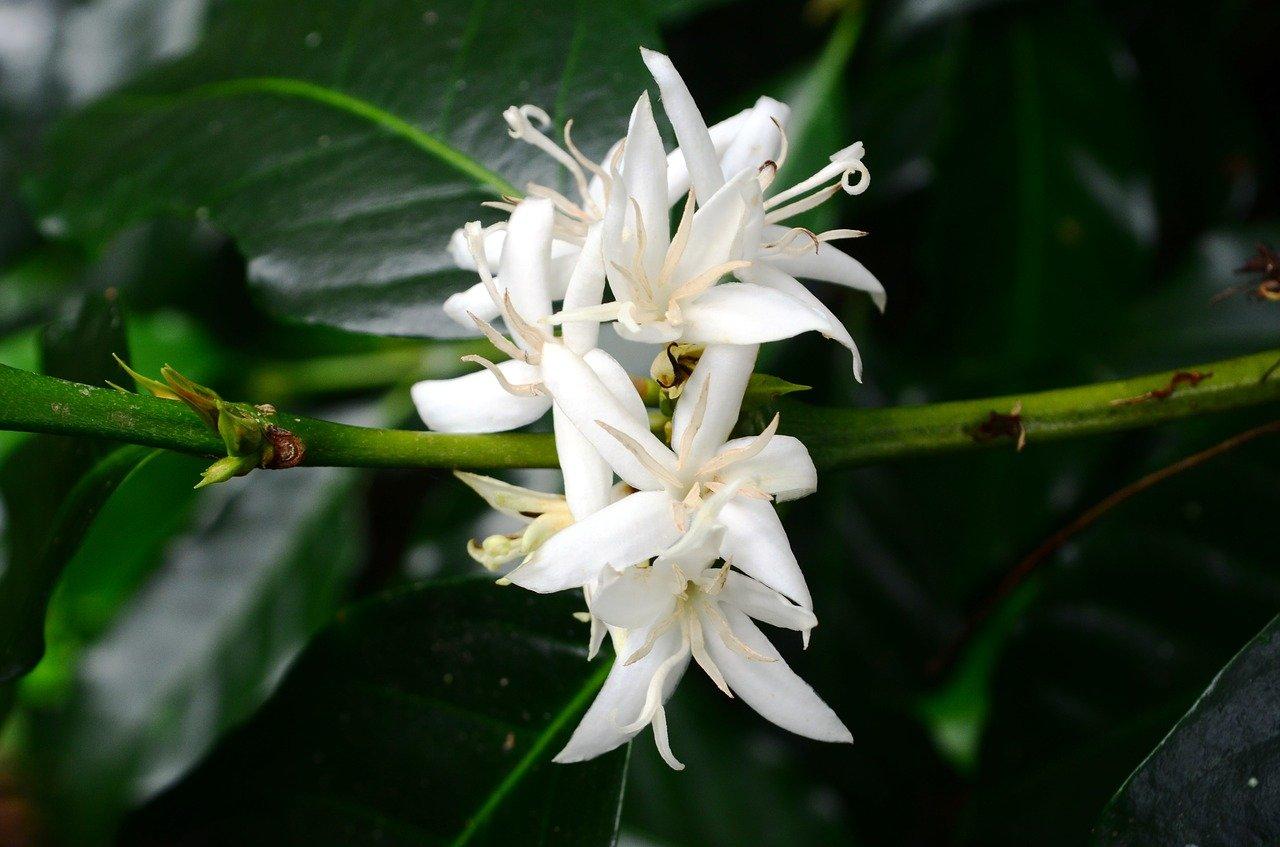 flower-1538202_1280