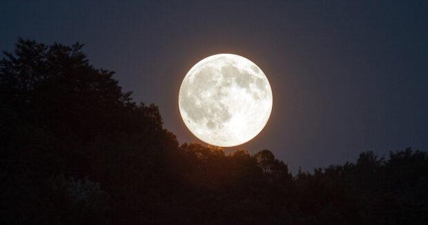 2021_moonlight