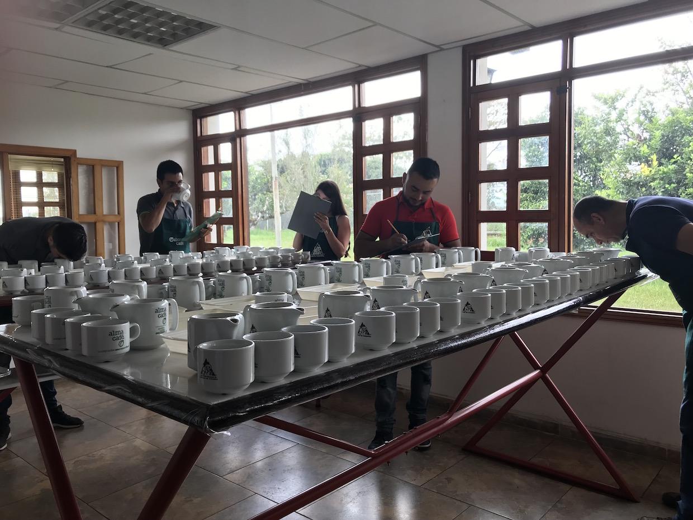 Demetria cupping