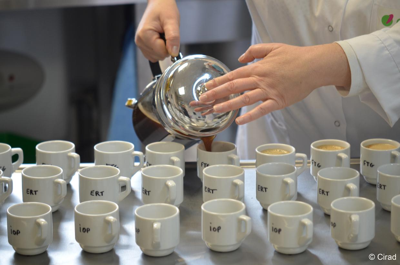 Cupping_Montpellier_cirad sensory analysis laboratory (∏ Cirad)