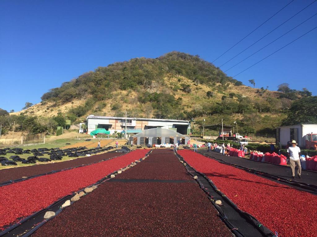 Fincas Mierisch Nicaragua