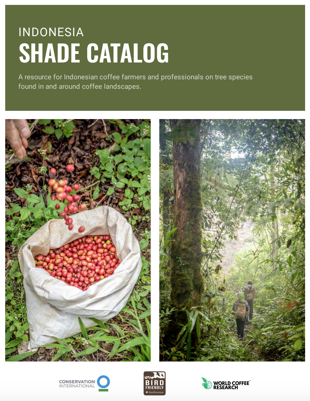 The Shade Catalog