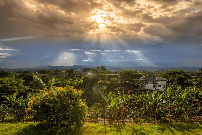 Colombian coffee vista