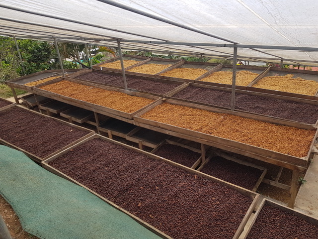 Costa Rica Exclusive Coffees auction 2