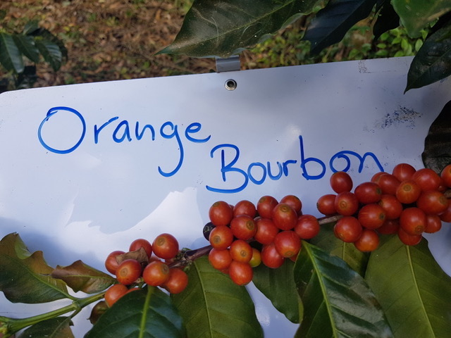 Costa Rica Exclusive Coffees auction 3
