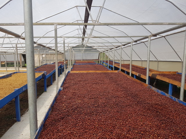 Costa Rica Exclusive Coffees auction
