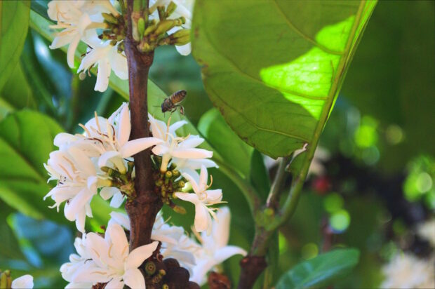 bees and coffee