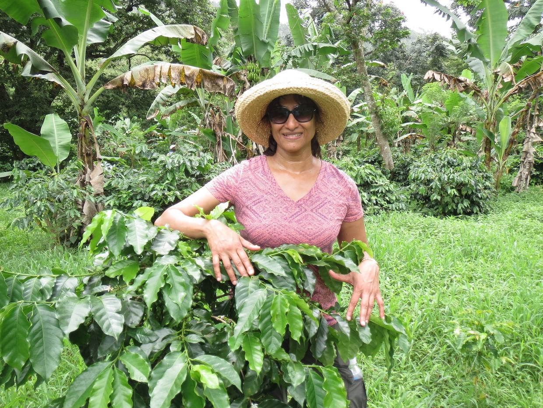 Jamaica Coffee Farm