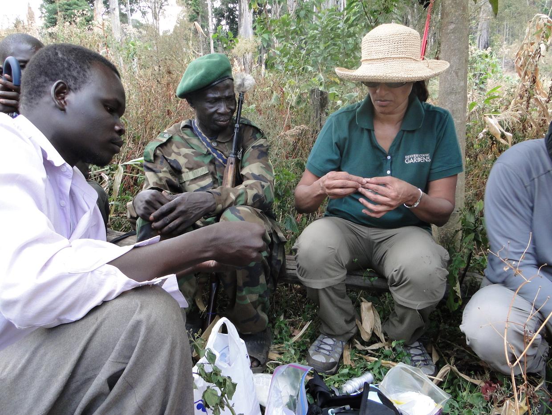 South Sudan coffee reserach project – field work 1 2012