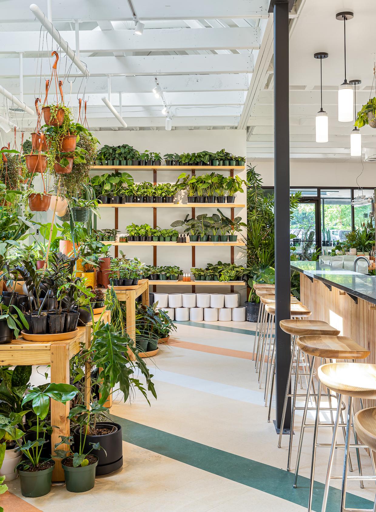 bar seating plants