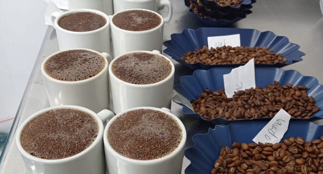 Cupping, coffee tasting in Columbia